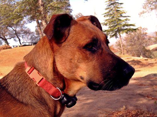 Gwen Dog