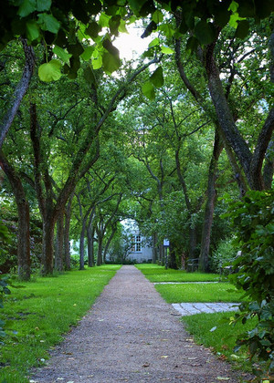 Tree_lined_path